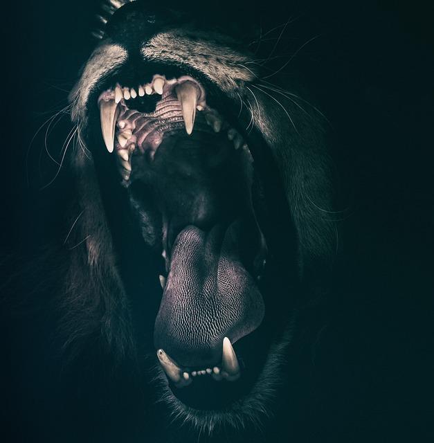 lion 2885618 640